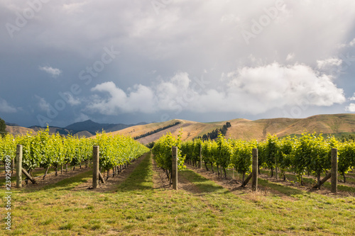 Staande foto Oceanië dramatic stormy sky above vineyards in Marlborough region, South Island, New Zealand