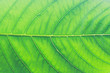 Close up of beautiful leaf texture with empty.
