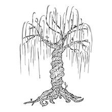 Tree Icon. Vector Illustration Big Tree Willow. Hand Drawn Weeping Willow Tree.