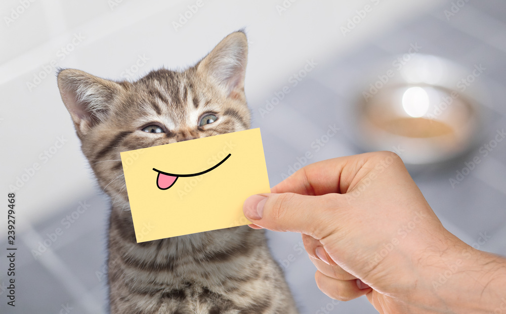 funny cat with smile and tongue on cardboard sitting near food