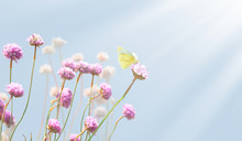 Pink Flowers And Yellow Butterfly On A Meadow. Sun In The Morning, Macro. Gentle Spring Background. Picturesque Colorful Image, Spring Template, Space For Text