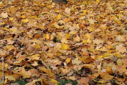 Foto  Tappeto di foglie secche ingiallite