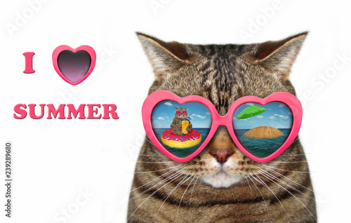 8cb00be7b9 The cool cat wears heart shaped sunglasses. There is funny reflection in  them. I love summer. White background.