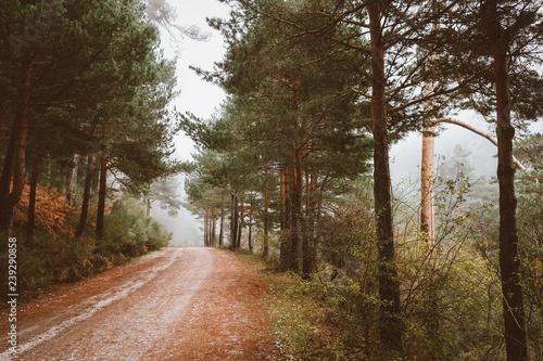 Fotografía  Sendero en el bosque