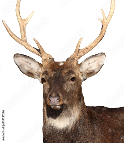 Recess Fitting Deer Deer on white background.