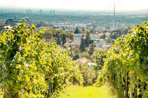 fototapeta na lodówkę Spätsommerliche Weinwanderung auf dem Wilhelminenberg in Wien, Österreich