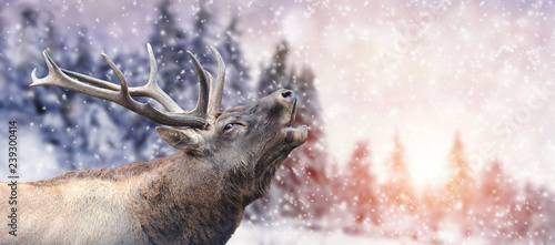Poster Hert Deer on winter background
