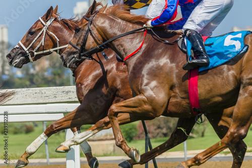 Keuken foto achterwand Art Studio Horses Racing Closeup Animal Running Action on Grass Track