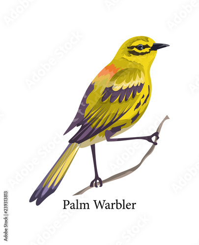 Fotomural Palm warbler. Wild bird with yellow feather