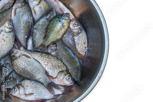 Fotografía  Freshly caught river fish. Crucians and sun perch. Good catch.
