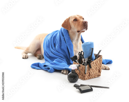 Obraz Cute Labrador Retriever dog and set for grooming on white background - fototapety do salonu