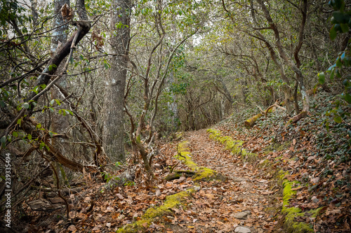 Misty Day on the Appalachian Trail Canvas Print