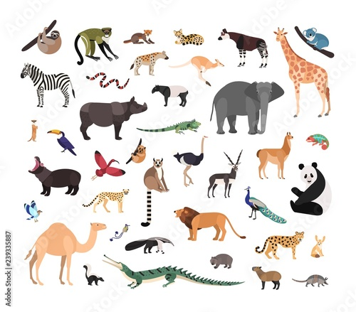 Collection of exotic wild animals isolated on white background. Bundle of fauna species living in savannah, jungle and desert. Wildlife set. Colorful vector illustration in flat cartoon style. Wall mural
