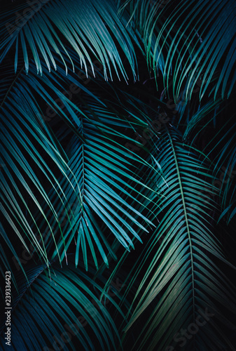 Wall Murals Palm tree Tropical Background of palm tree leaves with a blue hue