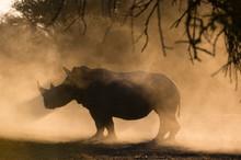 Silhouette Of White Rhinoceros...