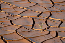 Mud Cracks With Sprouting Plan...