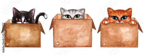 Cute kitten in carton box, cute cat Canvas Print