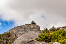 Marmot Perched High Up On Boulder Against Cloudy Sky With Blue Showing Through