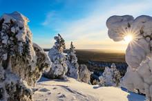 Sun And Blue Sky Frame The The Frozen Tree Branches In The Snowy Woods Ruka Kuusamo Ostrobothnia Region Lapland Finland Europe