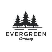Evergreen / Pine Tree Logo Design Inspiration - Vector
