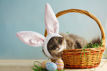 Gray Fluffy Cat With Bunny Ears In Easter Basket With Easter Eggs