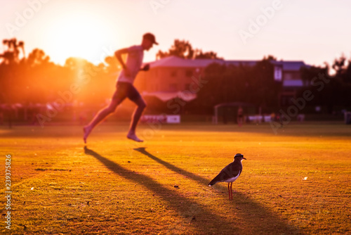 Runner in beautiful evening light running by birds. Sport in nature, concept photo