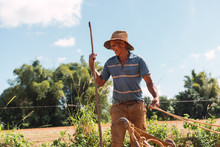 Aged Man Cultivating Soil With Plough In Sunny Day
