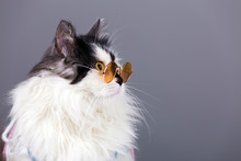 Portrait Of Black White Cat In Knitted Winter Sweater And Glasses On Gray Background
