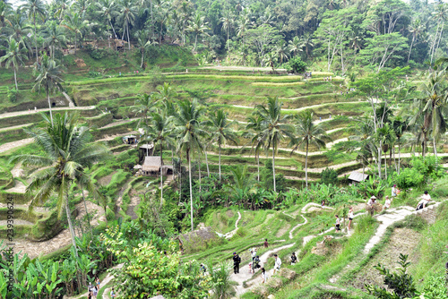 Foto op Aluminium Indonesië Tegalalang Rice Terraces is one of the main reasons to visit Ubud in Bali Island, Indonesia