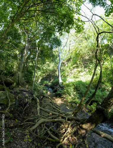 Obrazy dżungla   paisaje