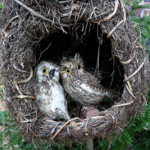 Two little owls sit side by side on a stick