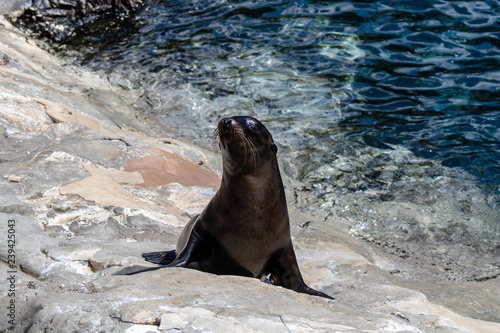 Photo  Sea lion