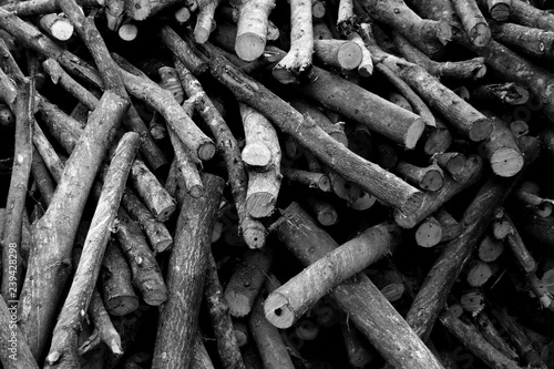 Poster Firewood texture pile of brown old firewood for background