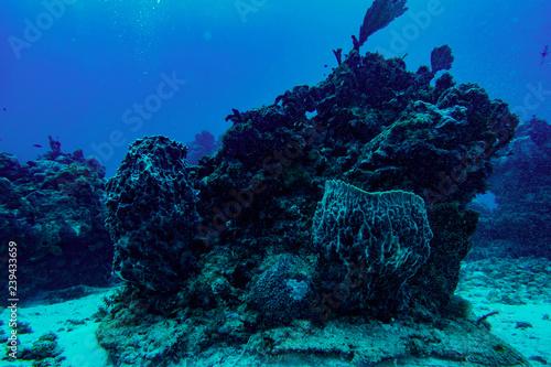 Plakat podwodny świat Karaibów