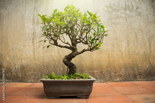 Small bonsai tree in a tank on a space with a wall background.