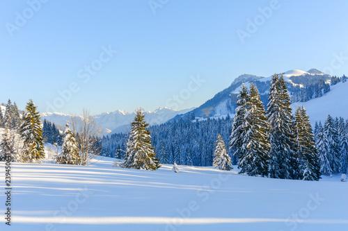Fotografie, Obraz  Spruce Trees in a Snowy Alpine Field