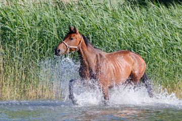 Pferde an der Müritz