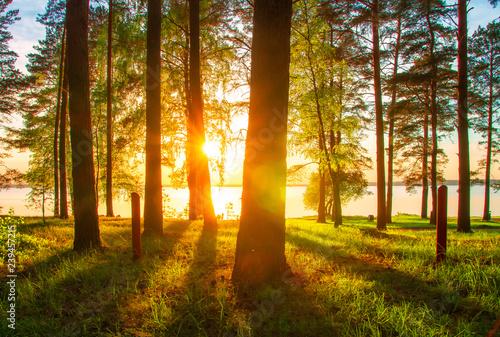 Photo sur Toile Cimetiere Spring forest