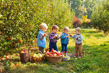 Cute Children Standing In Autumn Apple Garden