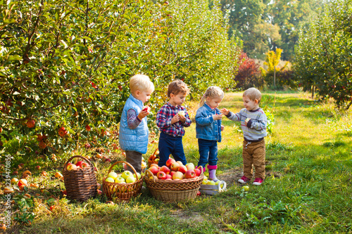 Fotografija  Cute children standing in autumn apple garden