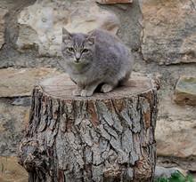 Gato Gris Sentado Encima Del Tronco Cortado De Un Pino