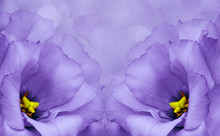 Floral Background. Purple Flowers Of Roses On A Light Purple Background. Close-up. Flower Composition.
