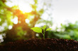 Seedlings grow in soil with sun light. Planting trees to reduce global warming.