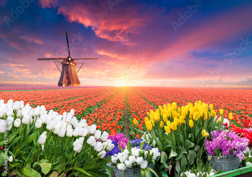 Fotobehang Tulp The road leading to the Dutch windmills from the canal in Rotterdam. Holland. Netherlands