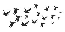 Flock Of Doves Or Pigeons Black Silhouette In Flying. Vector Flat Illustration Of Bird Migration Isolated On White Background.