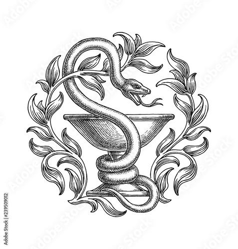 Photo Символ медицины и фармацевтики, змея и чаша, рисунок на белом фоне