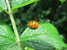 Fotografias De Insectos Varios...
