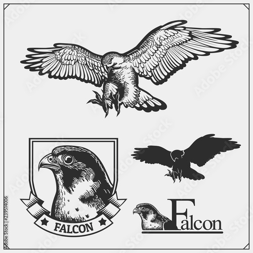 Falcon emblems and design elements for sport club Canvas Print