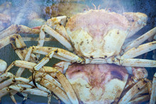 Sea Crabs Behind The Wet Stall...