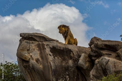 Photo Lions of the Serengeti